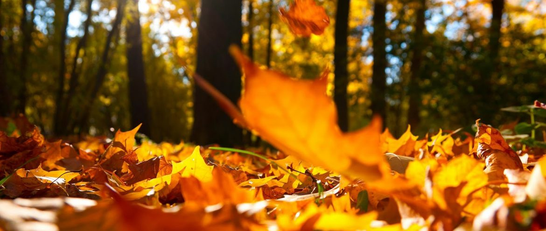 De herfst is er weer